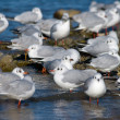 Gulls on the beach — Stock Photo