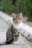 Small kitten — Stock Photo