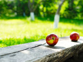 Apples on the park bench — Stock Photo