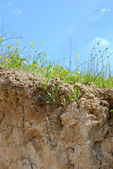 Coastal soil erosion — Stock Photo