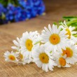 Stock Photo: Fresh camomile flowers