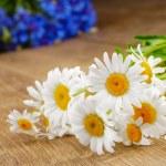 frische Kamille-Blüten — Stockfoto