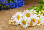 Fresh camomile flowers — Stock Photo