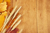 Autumn leaves and wheat ears — Stock Photo