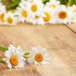 Fresh chamomile flowers - Stock Photo