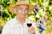Senior viticulturist — Stock Photo