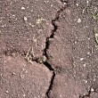 Crack on dry ground — Stock Photo