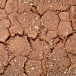 Cracks on dry ground — Stock Photo