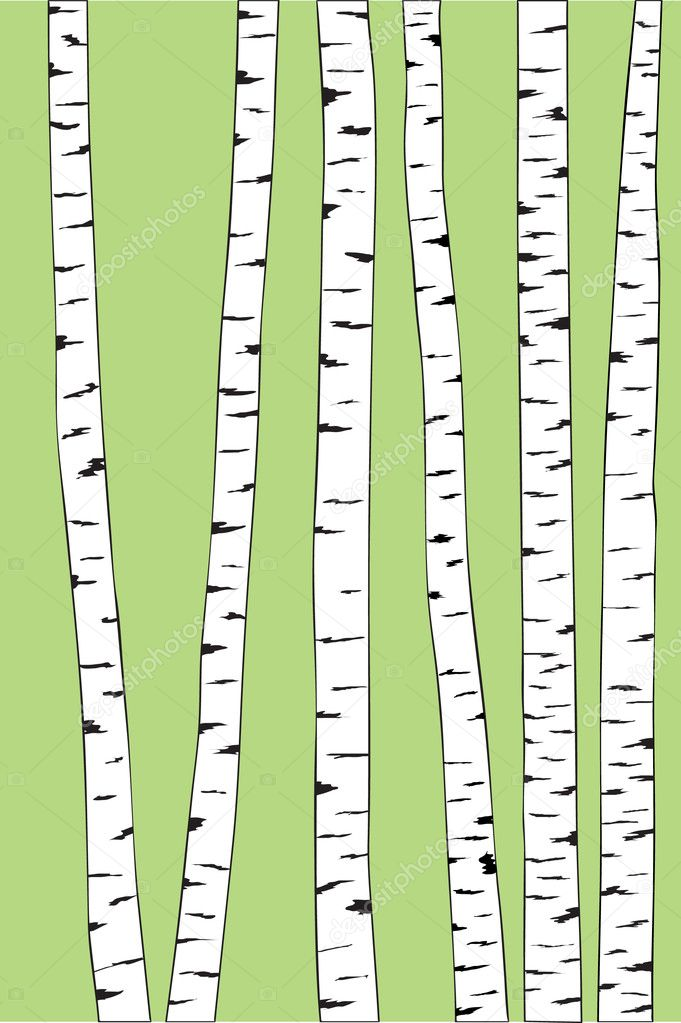 Birch trunk trees background. Vector illustration — Stock Vector #5419944