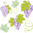 Creative grapes set elements. Vector illustration — Vector de stock