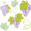Creative grapes set elements. Vector illustration — Imagen vectorial