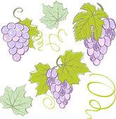 Creatieve druiven set elementen. vectorillustratie — Stockvector