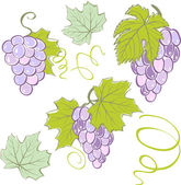 Creative grapes set elements. Vector illustration — Vetorial Stock