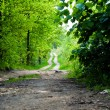Country road in summer forest — Stock Photo