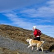 Hiking in mountains with a dog — Stock Photo