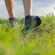 Walking on green grass — Stock Photo #5672352