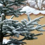 Christmas tree — Stock Photo #5923883