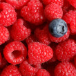 Blueberry on a background of raspberries — Stock Photo