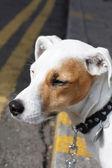 Lindo perro — Foto de Stock