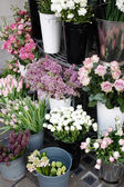 Colorful flowers in containers — 图库照片