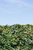 Cobertura verde — Foto de Stock