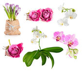 Beautiful flowers background — Stock fotografie