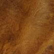 Distressed leather texture — Stock Photo
