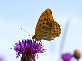The motley butterfly on a thistle flower — Stock Photo