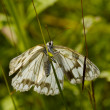 The motley butterfly in a grass — Stock Photo #5832656