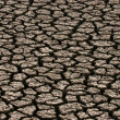 Stock Photo: Parched land