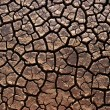 Parched land - Stock Photo