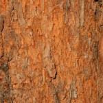 Tree bark background — Stock Photo #5488542