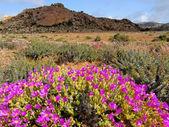 Paisagem da flor selvagem — Foto Stock