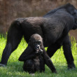 Black gorilla with a baby on the natural background — Stock Photo