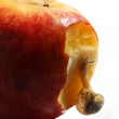 Snail on apple — Stock Photo