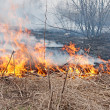 Fire. The dry last year's grass burns — Stock Photo