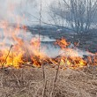 Stock Photo: Fire. dry last year's grass burns