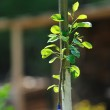 New growth concept witn young tree — Stock Photo