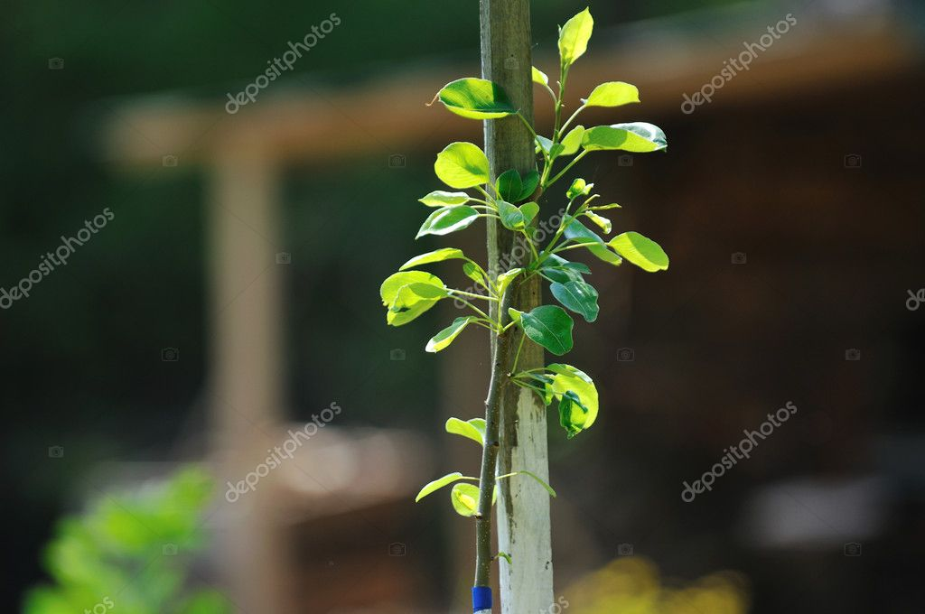 New growth concept witn young tree outdoor in nature — Stock Photo #5458646