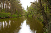River in forest in springtime — Stock Photo