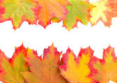 Frame from autumn maple leaves — Stock Photo