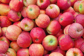 Riped red apples — Stock Photo