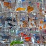 """""""Fish market"""" — Stock Photo #6643341"""