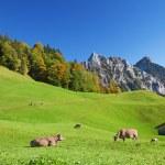 Autumn in alps — Stock Photo