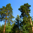 Trees and blue sky — Foto Stock