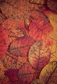 黑暗的树叶背景 — 图库照片