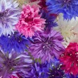 Stock Photo: Background formed by cornflowers