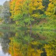 Yellow and green trees reflection — Stock Photo #6260171