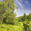 Summer landscape with birch — Stock Photo