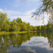 Green trees near pond with reflection — Stock Photo